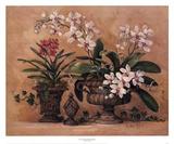 An Orchid Renaissance Stampe di Barbara Mock