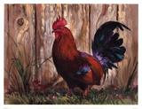 Bantie Rooster Posters by Nenad Mirkovich