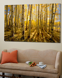Aspen Trees in Autumn Poster di John Eastcott & Yva Momatiuk