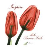 Inspire Tulips Poster di Albert Koetsier