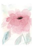 Blush Peony I Posters av Beverly Dyer