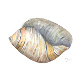 Sea Shell Neutral 1 Affiches par Beverly Dyer
