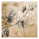 Grape Vine Láminas por Victoria Brown