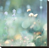 Morning Meadow I Opspændt lærredstryk af Kate Carrigan