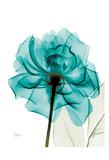 Teal Spirit Rose Kunstdruck von Albert Koetsier