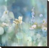 Morning Meadow II Opspændt lærredstryk af Kate Carrigan