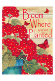 Bloom Where You Are Planted Stampe di Laurie Korsgaden