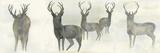 Wild Family Affiches par Beverly Dyer