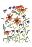Orange Corn Flower Poster by Beverly Dyer