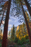 North View Through The Trees, Firefall, Horsetail Falls, Yosemite National Park Fotografie-Druck von Vincent James