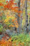 An Array of Fall Color, Maine Coast, New England Fotografie-Druck von Vincent James