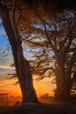 Cypress Tree Sunrise, Glorious Point Reyes National Seashore, California Coast Fotografie-Druck von Vincent James