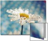 Daisy Flower with Water Droplets on Petals Kunstdrucke von Carolina Hernández