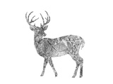 Deer Posters by  Peach & Gold