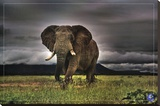African Majesty, Save Our Planet (Elephant) Art Poster Print Stretched Canvas Print