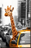 New York-Safari Stretched Canvas Print