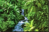 Rainforest (Waterfall) Art Poster Print Stretched Canvas Print
