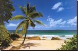 Palm Beach (Tropical Landscape Photo) Art Poster Print Stretched Canvas Print