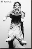Ed Sheeran-Cat Opspændt lærredstryk