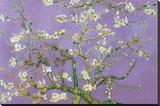 Vincent Van Gogh Almond Blossoms Lavender Art Print Poster Stretched Canvas Print