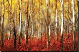 Aspen Grove - Red Stretched Canvas Print