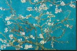 Amandelbloesem, San Remy,1890 Kunst op gespannen canvas van Vincent van Gogh