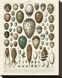 Oeufs Bedruckte aufgespannte Leinwand von Adolphe Millot