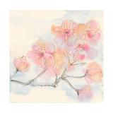 Pink Blossoms III Poster van Chris Paschke