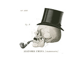 Dandy Bones II Prints by Sue Schlabach