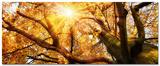 Glorious Autumn Poster