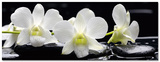 Camellia Harmony Art