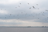 Gulls Flying over the Sea Photographic Print by Torsten Richter
