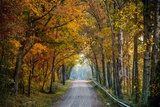 Rural USA with Trees in Autumn Along Track Photographic Print by Jody Miller