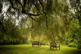Rural Scene with Garden Benches under a Large Willow Tree Photographic Print by Jody Miller
