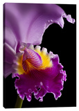 Purple Orchid Stretched Canvas Print by Barry Seidman