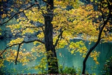 Yellow Leaves in the Fall Photographic Print by Jody Miller