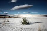 Desert Scene in USA Photographic Print by Jody Miller