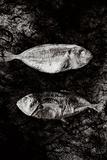 Two Dry Fishlying on a Piece of Elephant Paper Photographic Print by Torsten Richter