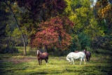 Horses in a Field at Fall in USA Photographic Print by Jody Miller