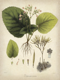 Vintage East Indian Plants I Poster por Maria Mendez