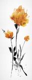 Floret Blush III Affiches par Tania Bello