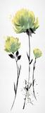 Floret Blush II Affiche par Tania Bello