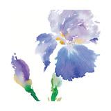 Iris Reproduction procédé giclée par Summer Thornton
