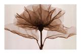 Eine Rose (Übergröße) Kunstdrucke von Steven N. Meyers