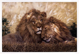 Brothers of the Serengeti Prints by W. Michael Frye