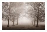 Layers of Trees II Art by Igor Svibilsky