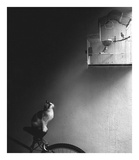 Patience Affiche par Jon Bertelli