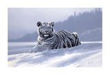 Siberian Tiger Print by Spencer Hodge