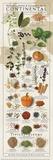 Regional Spices - Continental Poster von  Ziegler/Keating