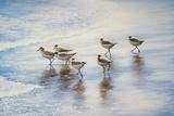 Sand Dancers Posters par Bruce Nawrocke